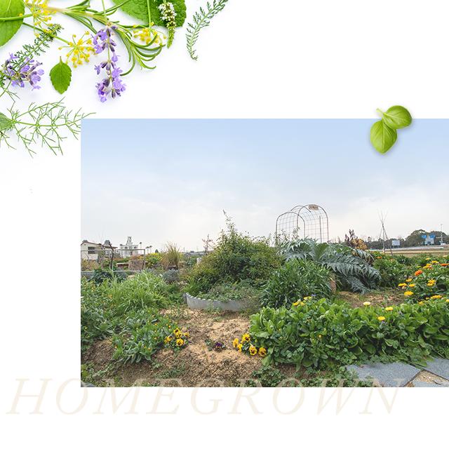 sp_hg_homegrown_img